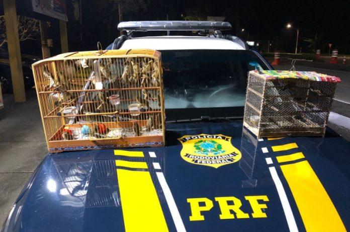 Homem é preso transportando aves ilegalmente